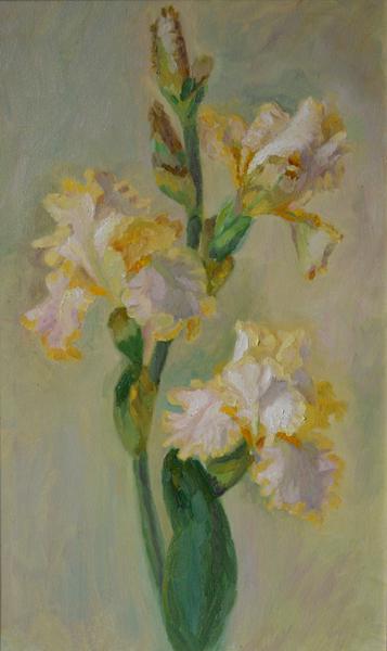 Gentle irises